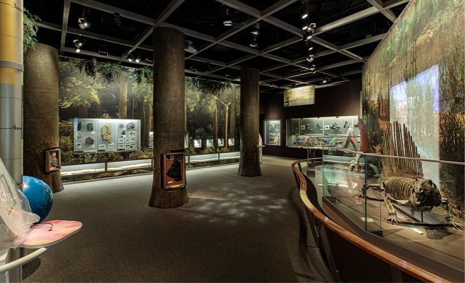 古生代展示室