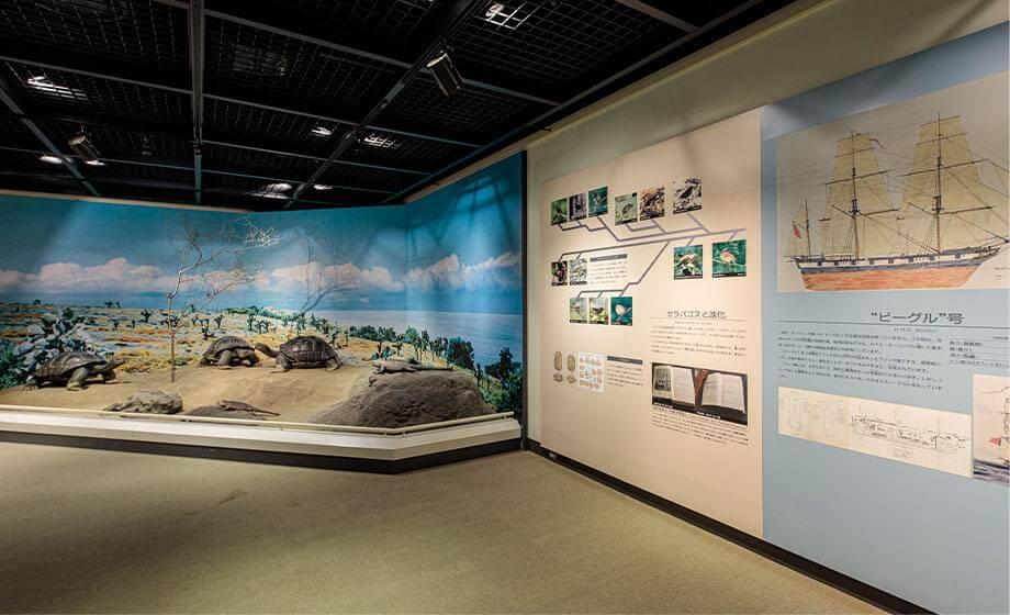 ガラパゴス物語展示室