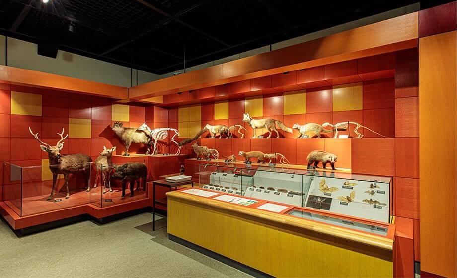 郷土の自然展示室