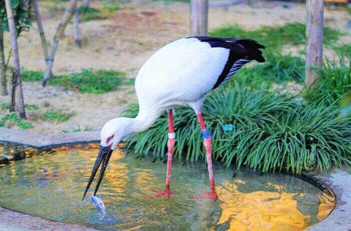 130種を超える動物が暮らす動物園