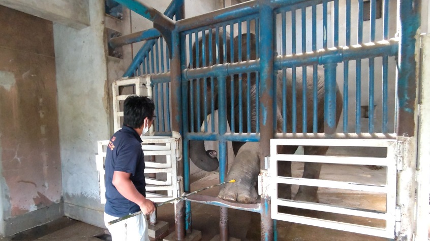 アジアゾウ3頭の近況報告 ~その2~ トレーニングが出来るようになりました