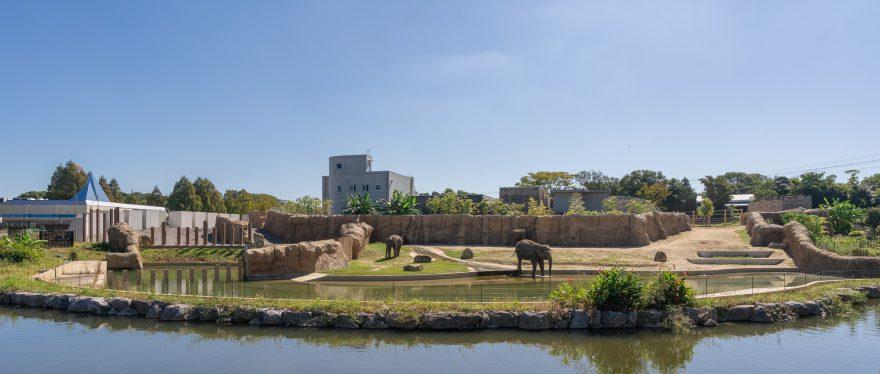 アジアゾウの広い放飼場